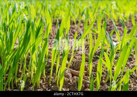 Vibrant green grass close up. Selective focus. High quality photo - Stock Photo