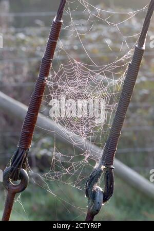 Dew-covered spiders' webs slung between steel cables supporting an electricity pole. Bedgebury Forest, Hawkhurst, Kent. UK. - Stock Photo