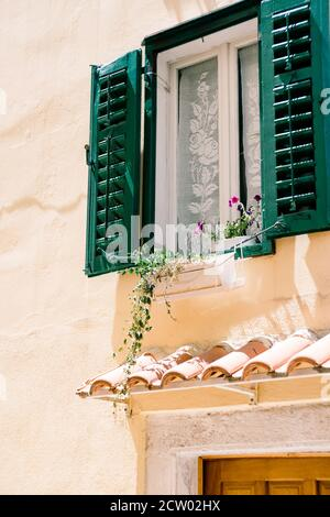 A window with open shutters in green and flowers on the windowsill by the white curtain above the door to the house. - Stock Photo