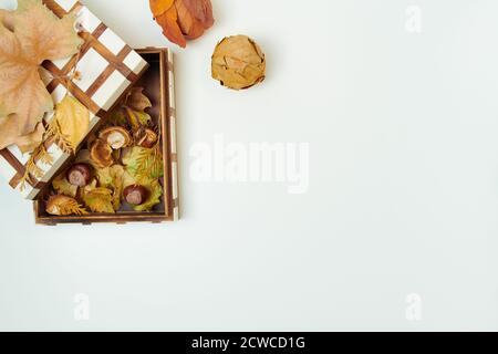 Hello november. autumn flat lay with leaves, chestnuts and box on white background. - Stock Photo