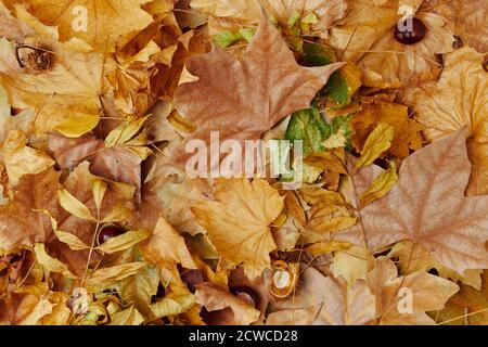 Hello autumn. autumn background with leaves. - Stock Photo
