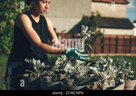 Concentrated caucasian woman potting flowers at home outside using gloves in a sunny summer day