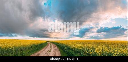 Elevated View Dramatic Sky With Fluffy Clouds On Horizon Above Rural Landscape Blooming Canola Colza Flowers Rapeseed Field. Country Road. Spring