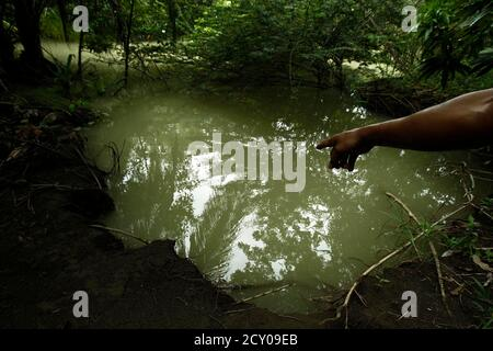 A police officer points to an entrance made by drug traffickers to disembark and hide their drugs in a mangrove swamp, along Manuel Antonio national park in Quepos, 172 km (107 milles) off San Jose, July 30, 2012. The lush national parks of Costa Rica have long attracted tourists from around the globe with their evergreen rainforests, white beaches and thermal springs. Recently, they have lured more unsavory visitors in the form of drug traffickers. Organized crime cartels have turned to Costa Rica's treasured nature reserves as governments wage military offensives against the gangs throughout - Stock Photo