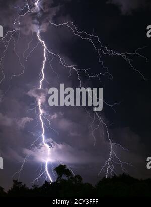 Vertical Image of Scary Real Lightning Striking over the Forest at Night - Stock Photo