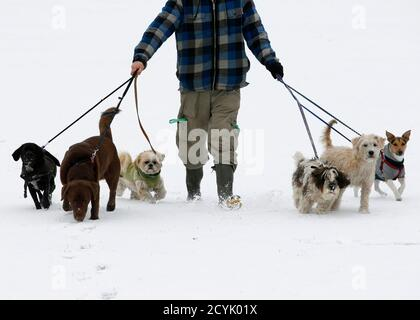 Dog walker Josh Williams walks in the snow on Hackney Marshes in east London December 1, 2010. British gas and power prices soared early on Wednesday as a cold snap elevated demand for heating and as neighbouring markets required imports from Britain to meet their own high energy consumption.    REUTERS/Luke MacGregor   (UNITED KINGDOM - Tags: ENVIRONMENT POLITICS SPORT SOCCER) - Stock Photo