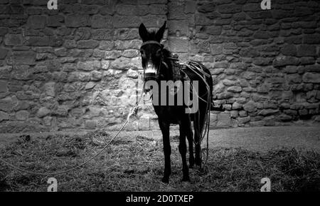 Donkey in field walking, animals and nature - Stock Photo