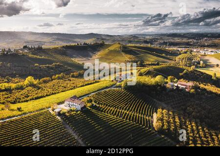 ITALY, PIEDMONT, LANGHE: Autumn evening sunlight on the vineyards in the Langhe area, Piemonte, Italy