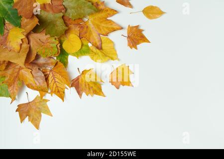 Hello september. autumn flat lay with leaves on white background. - Stock Photo