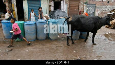 A cow stands near residents of Sanjay Colony, a residential neighbourhood, waiting for a water tanker from the state-run Delhi Jal (water) Board in New Delhi June 30, 2009. Delhi Chief Minister Sheila Dikshit has given directives to tackle the burgeoning water crisis caused by uneven distribution of water in the city according to local media. The board is responsible for supplying water in the capital. REUTERS/Adnan Abidi (INDIA ANIMALS SOCIETY)