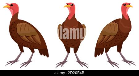 Turkey in different poses. Farm animal in cartoon style. - Stock Photo