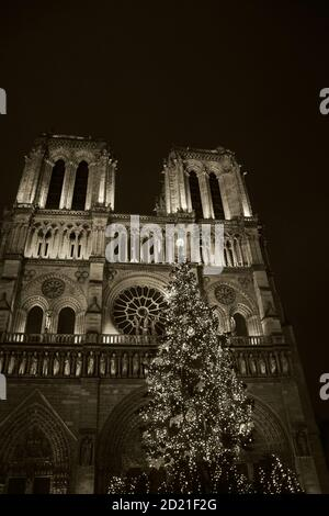 Christmas tree in front of the Notre Dame cathedral in the evening. Paris, France. 2018 last Christmas before a fire in April 2019. Old historic sepia - Stock Photo