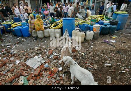 Goats stand near as residents of Sanjay Colony, a residential neighbourhood, wait for a water tanker from the state-run Delhi Jal (water) Board in New Delhi June 30, 2009. Delhi Chief Minister Sheila Dikshit has given directives to tackle the burgeoning water crisis caused by uneven distribution of water in the city according to local media. The board is responsible for supplying water in the capital. REUTERS/Adnan Abidi (INDIA SOCIETY ENVIRONMENT)
