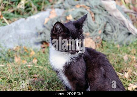 Homeless black kitten on the background of green grass, looking Stock Photo