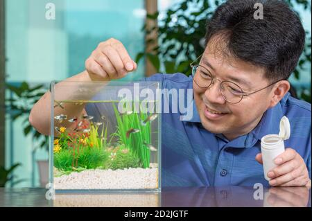 A middle-aged Asian man who feeds the guppy he raises in a small fishbowl. - Stock Photo