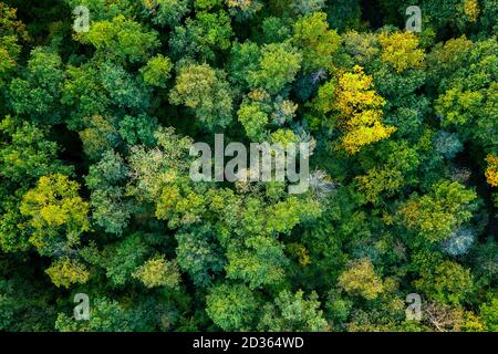aerial top down view of a green forest, drone view, natural green background - Stock Photo