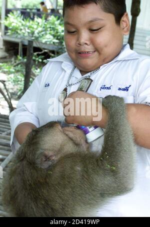 A stray monkey tries to steal a bottle of yoghurt from a student during lunchtime at a school in Samul Songkram province, 80 km southwest of Bangkok May 29, 2001.  About 100 pupils at Ban Chu Chee Primary School have been robbed of food by over 150 monkeys, whose mangrove habitat has constantly been encroached by human beings for over a year. - Stock Photo