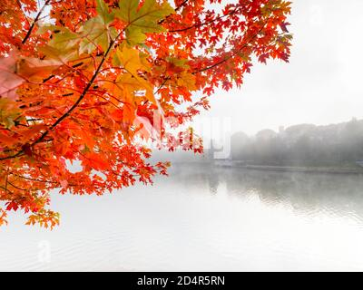 Intensive Red vivid color colored leaves Fall Autumn season seasonal hanging from above dreamy foggy morning coastline Bajer lake in Fuzine in Croatia - Stock Photo