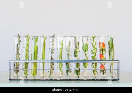 Illustration about research on plants, aromatic herbs and flowers. Stock Photo