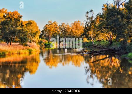 Scenic gumtrees and grass on shores of Macquarie river in Dubbo city of Australia western plains - NSW.