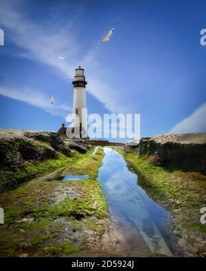 Seagulls flying around Pigeon Point Lighthouse, California, USA - Stock Photo