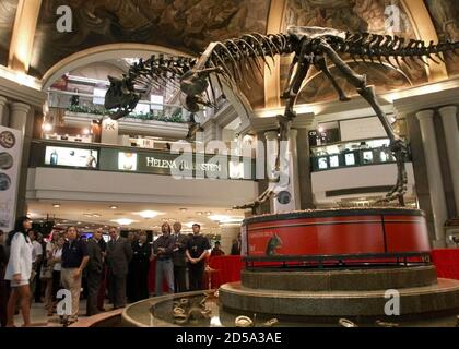 Onlookers gaze at the reconstructed skeleton of the carnivorous dinosaur Carnotaurus Sastrei displayed in a central Buenos Aires shopping center March 18. Discovered in the Argentine region of Patagonia, the 110-million-year-old dinosaur was 30 feet long, 15 high and weighed three tons. It is one of two found so far.  EM/RC/JDP - Stock Photo
