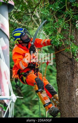 Denham, UK. 15th October, 2020. A tree cutter cuts ivy off a high mature tree ready for it's likely destruction inside an HS2 compound. The tree is on the other side of a high security fence next to the Denham Ford Protection Camp where environmental campaigners are living high in the trees protecting them from the clutches of HS2. The HS2 construction for the controversial High Speed Rail from London to Birmingham raises great concerns for environmental activists due to the impact the project is having on the countryside and woodlands. Credit: Maureen McLean/Alamy Live News - Stock Photo