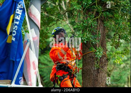 Denham, UK. 15th October, 2020. A tree cutter cuts ivy off a high mature tree ready for it's likely destruction inside an HS2 compound. The tree is on the other side of a high security fence next to the Denham Ford Protection Camp where environmental campaigners are living high in the trees protecting them from the clutches of HS2. The HS2 construction for the controversial High Speed Rail from London to Birmingham raises great concerns for environmental activists due to the impact the project is having on the countryside and woodlands. Credit: Maureen McLean/Alamy - Stock Photo
