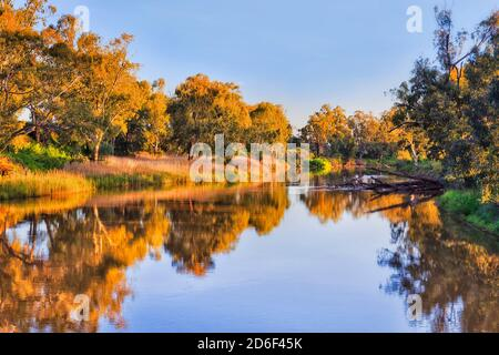 Golden light on canoopy of gum trees along Macquarie river in Dubbo from footbridge at sunset.