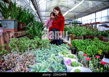 (201017) -- CHANGXING, Oct. 17, 2020 (Xinhua) -- Customer choose flowers and seedlings during the Changxing flower and tree fair in Sian Town of Changxing County, east China's Zhejiang Province, Oct. 16, 2020.  The Changxing flower and tree fair, exhibiting more than 1,000 species of flowers and trees, kicked off in Sian Town of Changxing on Friday. With the planting area of flowers and trees reaching 283,000 mu (about 18,867 hectares), the flower and tree business in Changxing has achieved a sales volume of nearly two billion yuan (about 298.6 million U.S. dollars) from January to September. - Stock Photo