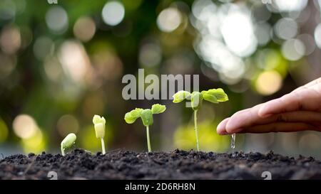 The hands of people watering small plants and the concept of environmental care and the World Environment Day. - Stock Photo