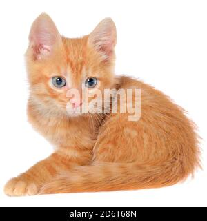 Orange kitten lays on a side view isolated on a white background.