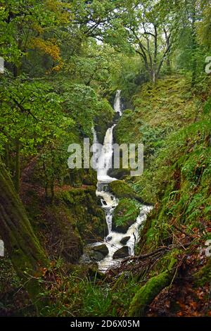 Stock Ghyll Force waterfall in a wooded forest area near Ambleside in Lake District National Park, England. The falls are surrounded by green trees.