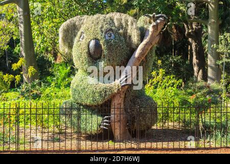 A koala sculpture made out of plants in the Royal Botanic Garden, Sydney, Australia