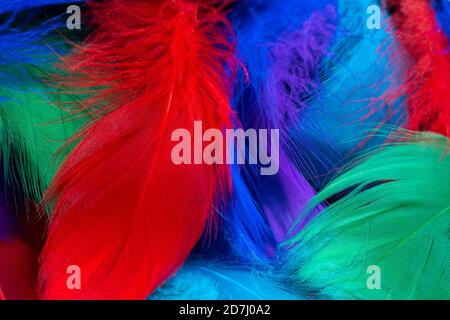 Beautiful background of colorful tropical birds feathers. Bird natural pattern. Close-up top view. Abstract shot - Stock Photo