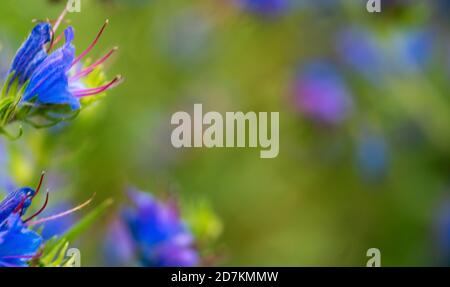 Close up of a purple and blue flower - Stock Photo