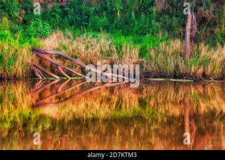 Dead wood trunks submerged in calm lazy waters of Macquarie river with reflection.