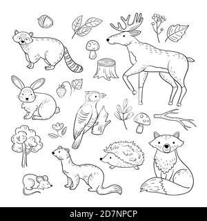 Sketch forest animals. Woodland cute baby animal raccoon elk hare woodpecker hedgehog marten fox children doodle vector hand drawn set. Illustration of animal forest, mouse and raccoon, hedgehog - Stock Photo