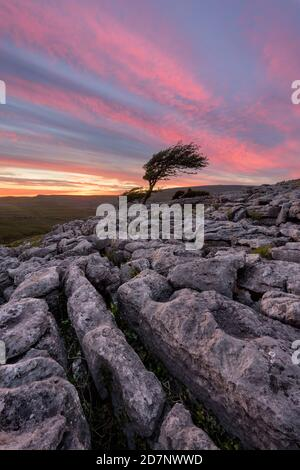 Beautiful sunset sky over lone tree with rocks in foreground. Taken in Yorkshire Dales, UK.
