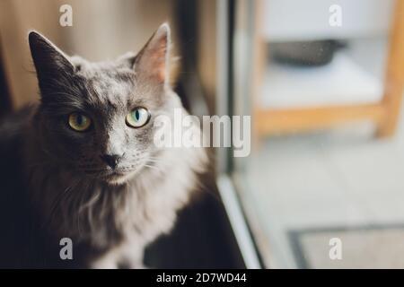 black Cat sitting near the glass door.