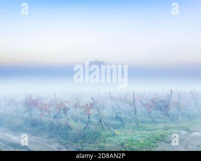 Pastel morning fog landscape Motovun in Istria Croatia Europe Red Autumnal leaves vineyard in foreground and oldtown on hilltop protruding through - Stock Photo