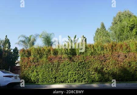 Tarzana, California, USA 28th October 2020 A general view of atmosphere of Lisa Marie Presley's former home at 18531 Wells Drive on October 28, 2020 in Tarzana, California, USA. Photo by Barry King/Alamy Stock Photo