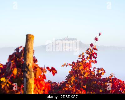 Intensive vivid Red colors Autumnal grapevine vineyard leaves focus on oldtown Motovun in Istria Croatia Europe like floating old town above thick fog - Stock Photo