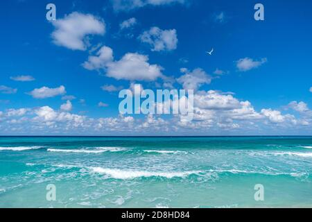 Beautiful tropical landscape with turquoise ocean. Horizon line on the background. endless clear blue sea and blue sky with white clouds merge on the