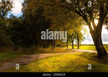 Bright sunlight through the leaves of a tree falls on the edge of a country road - Stock Photo