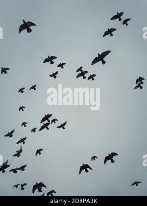 Flock of migratory birds flying over head against the cloudy autumn sky background. Birds silhouettes, nature wildlife. Fall season scene - Stock Photo