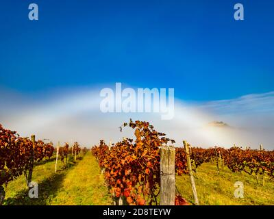 Glorious fogbow fog-bow White arch across frame optical phenomena above Red Autumnal Autumn Fall vineyard leaves near Motovun in Istria Croatia Europe - Stock Photo