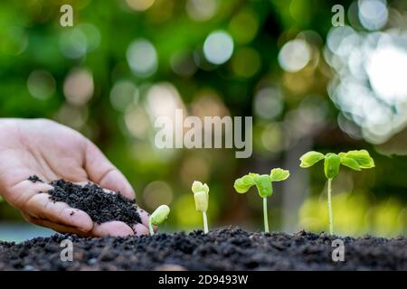 Farmers' hands are planting seedlings on the ground, including a blurred green nature backdrop, forestry concepts and environmental protection.