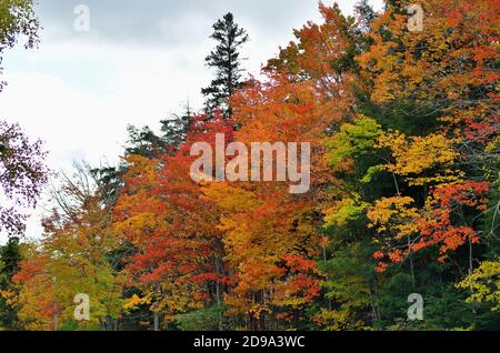 Paradise, Michigan, USA. Fall descends on a stretch of trees bordering a highway in the Upper Peninsula of Michigan.