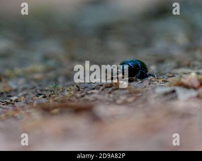 A selective focus shot of a beetle crawling on the soil - Stock Photo